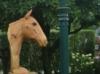 Paardebuste