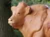 Limousin Stier